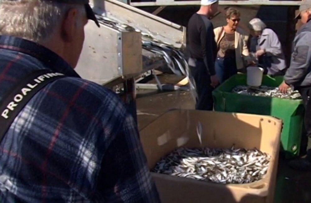 REPORTERI VIDEO: Pärnus saab värsket räime osta otse kalurilt