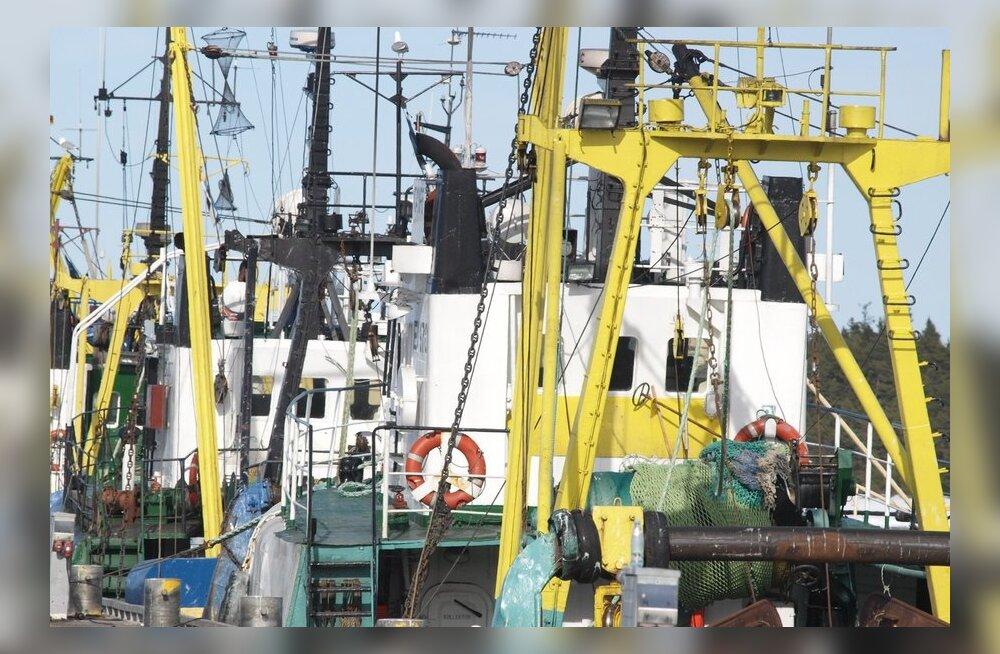 Kalatraalid Dirhami sadamas