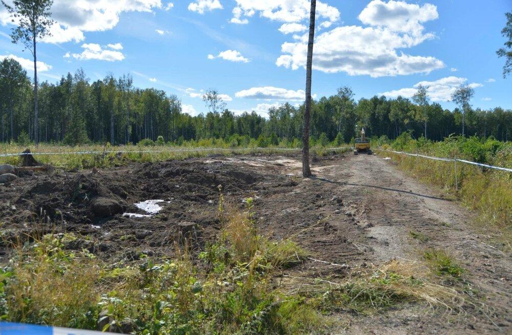 Keskkonnaamet: lubame surnud sigu matta vaid ohututesse kohtadesse