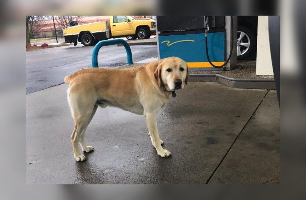 Mees läheb eksinud koera aitama, kuni ta märkab, mis on kirjas koera kaelarihmal