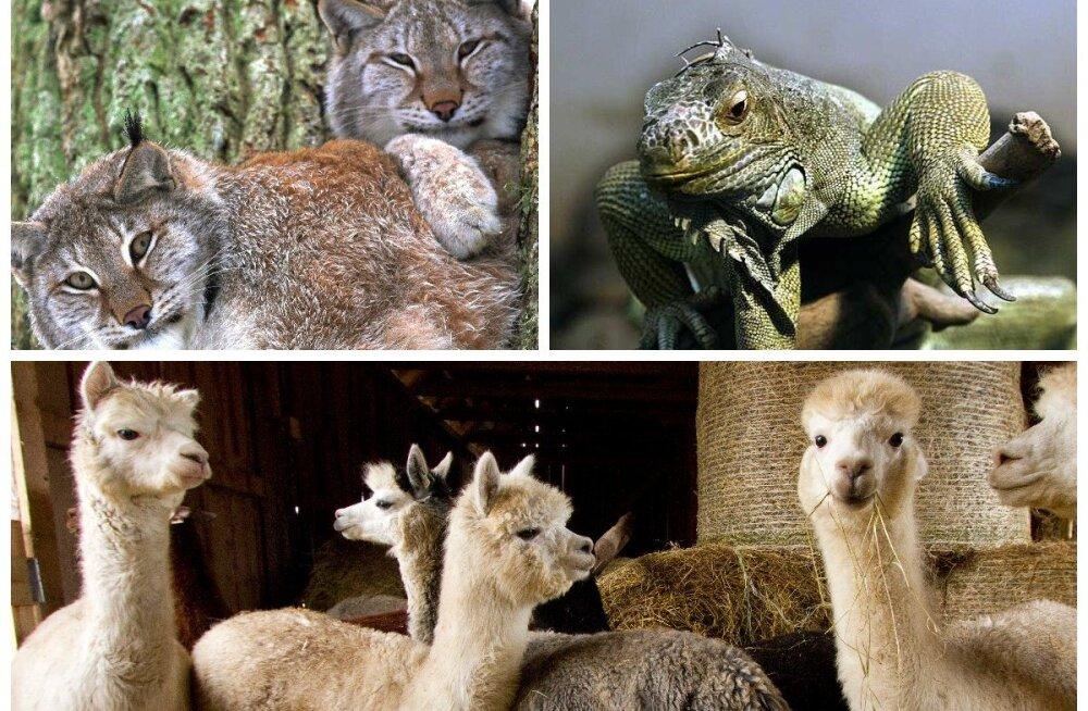 Не только Таллинн: самые интересные зоопарки и фермы Эстонии