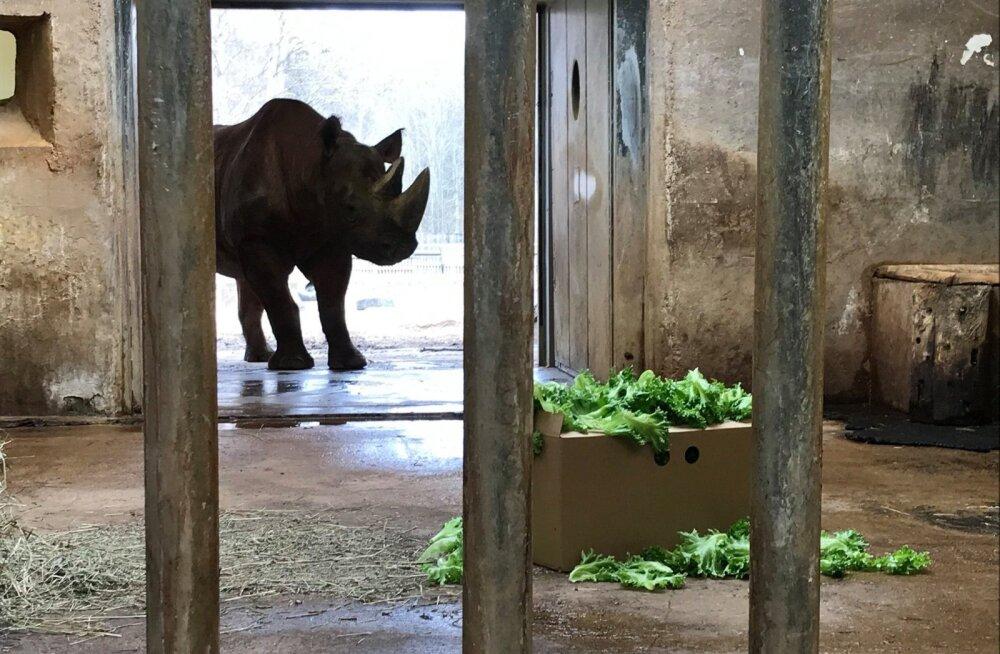 FOTOD | Tallinna loomaaia elanikud tänavad Raplamaa aiandit värske ampsu eest