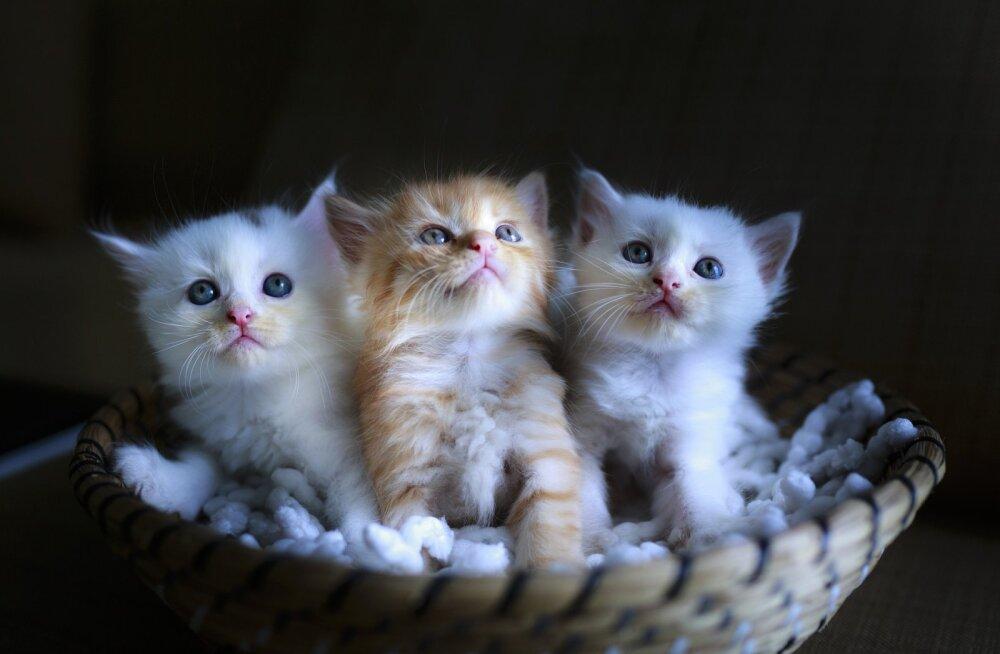 Otsid endale kassi? Sõbrakuu raames algas varjupaikades uus kampaania