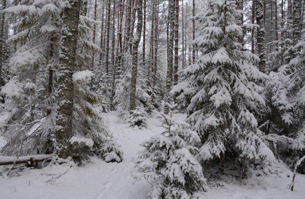 Lumesadu Kõrvemaal