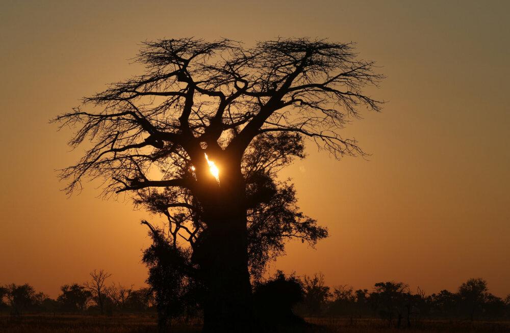 Дерево прокаженных: как в Африке боролись со страшной болезнью