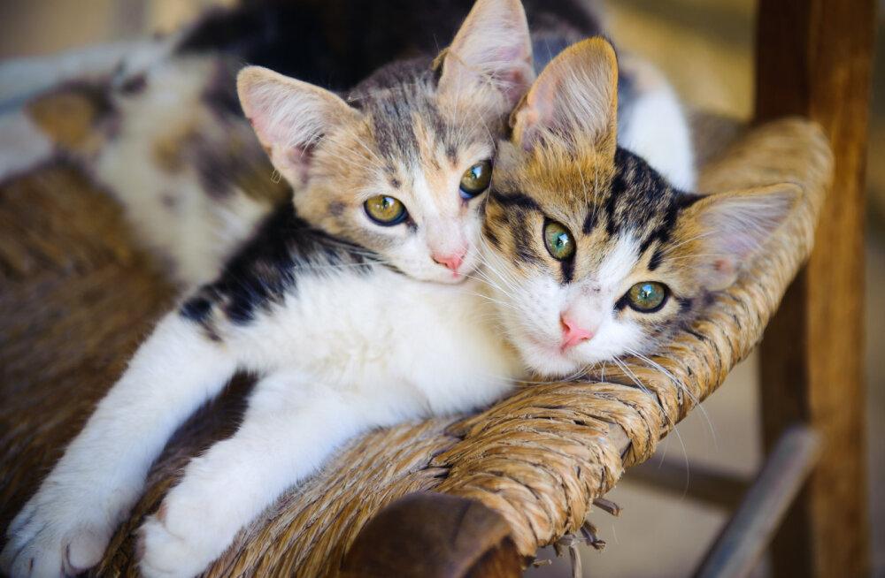 Täna, 8. augustil on rahvusvaheline kassipäev!