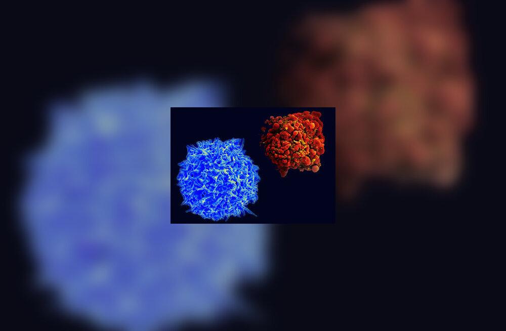 Terve lümfotsüüt ja HI-viirusest näritud lümfotsüüt.