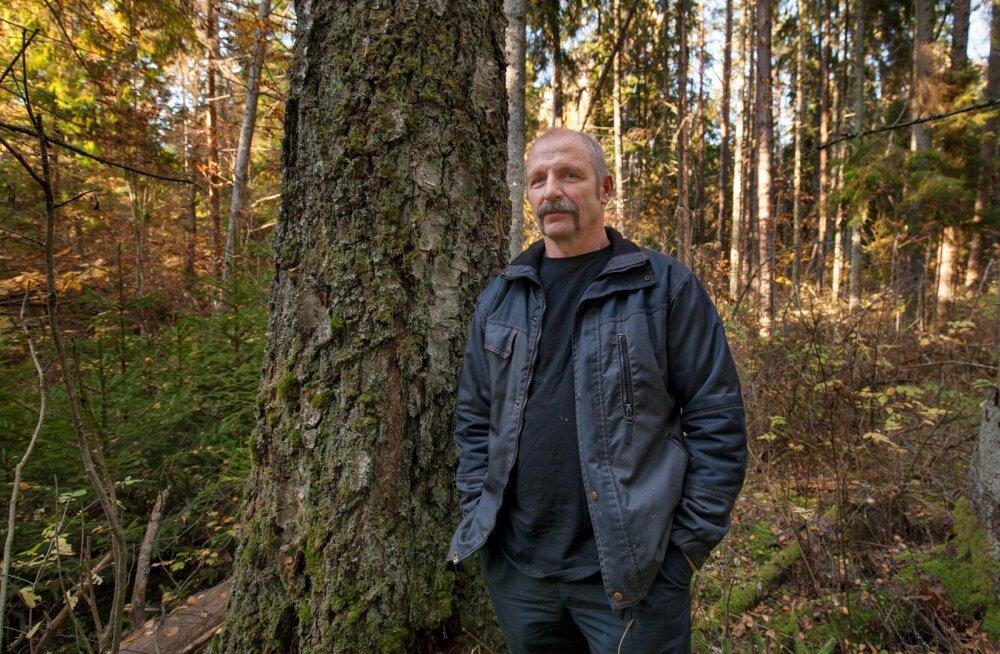 Siia tuleb raudtee: Alar Haabma peab Rail Balticule loovutama üle kahe hektari raieküpset metsa. Ta eelistaks vahetust, kuid praegu veel ei tea, missuguse väärtusega metsatükki riik talle vastu pakub.