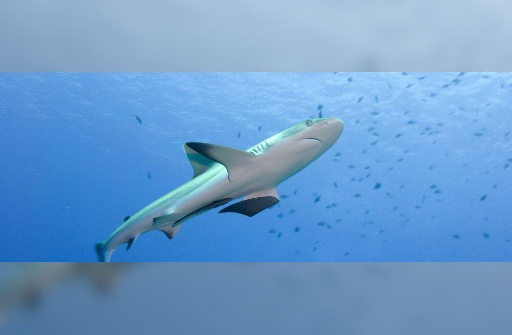Врешь, не откусишь: Топ-8 лучших мест для наблюдения акул… из клетки