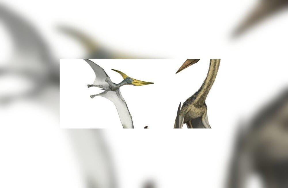 Uued tõendid: linnud arenesid ürgsisalikest