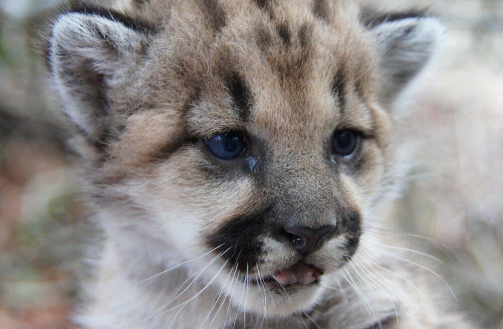 11 ebatavalist fakti loomariigi veidruste kohta