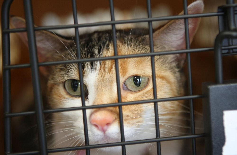 """Два кота погибли на борту """"Аэрофлота"""" — переноски с животными швыряли при разгрузке"""