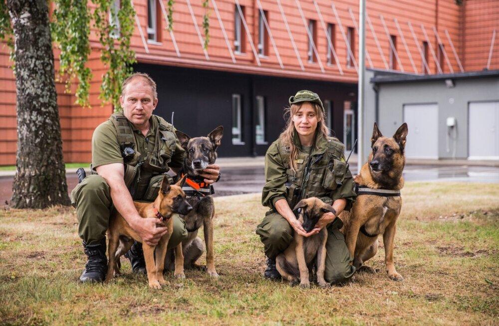 Janek ja Kersti Nüüd koos oma teenistuskoertega - vasakult vaadates Otto 2 (Ott), Felix, Ärnest (Ärni) ja Aron
