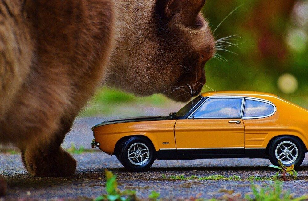 Autosõidu ABC: niimoodi lemmiklooma autos kinnitades tagad turvalise sõidu