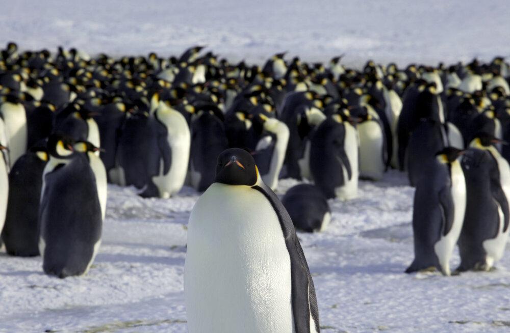 Kuidas sai Antarktisest paksu jääkilbi alla maetud manner? Teadlased on jõudnud vastuseni