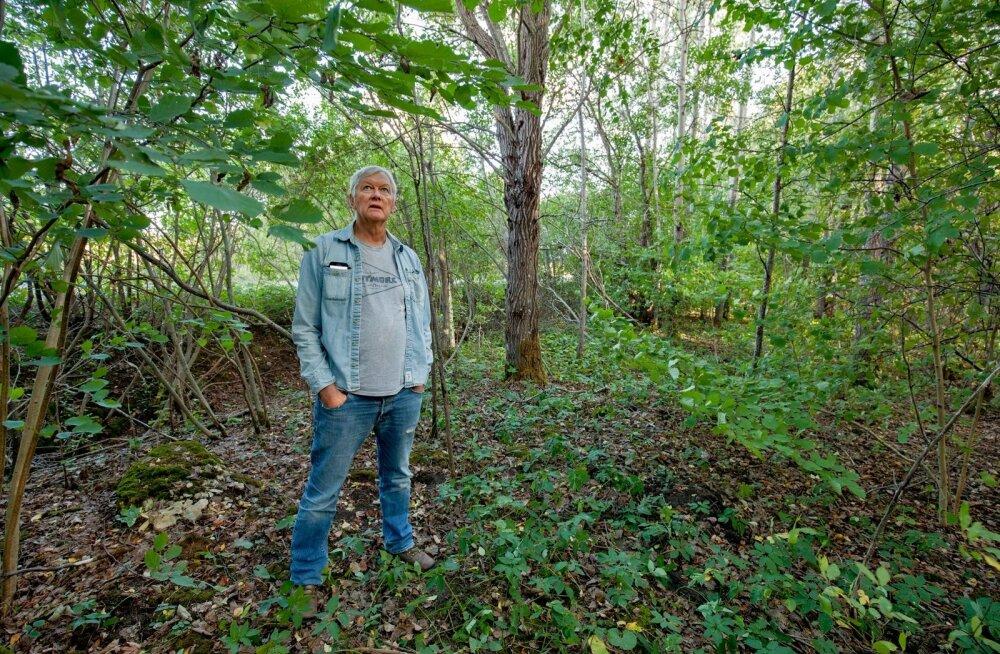 Mart Erik ütleb, et metsa, sh käest lastud metsa, on Eestimaal palju. Ta leiab, et muidugi on iga omaniku enda asi, mida ta oma metsaga ette võtab, ent kui sellel ikka suurte massiividena mädaneda lasta, on see lõppkokkuvõttes ju meie ühine rikkus, mis nõ