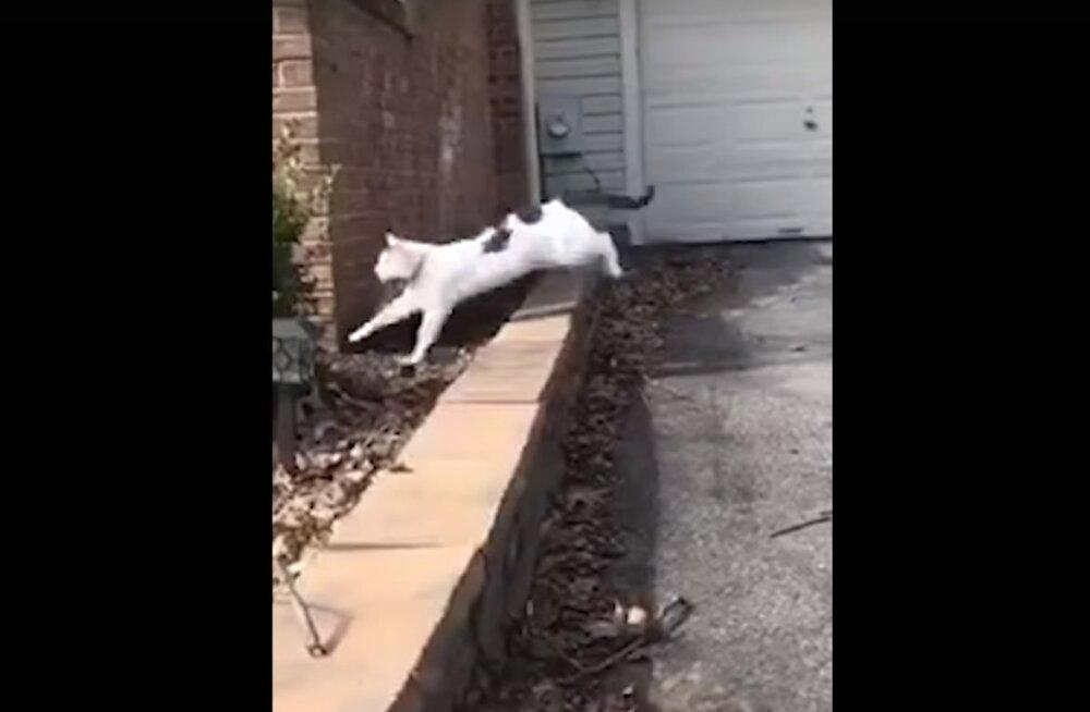 Naljakas VIDEO | Just nagu filmis: põõsasse karanud kass muutub ühtäkki hoopis koeraks!