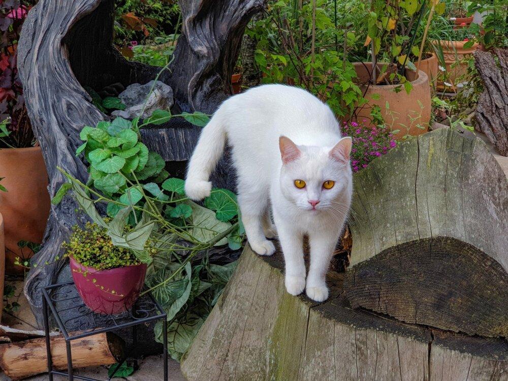 Любители покупаться: топ-5 пород кошек, которые не боятся воды