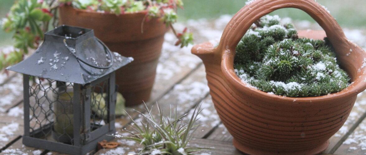 Viis tähtsat aiatoimetust, mis tasuks enne lume tulekut ära teha