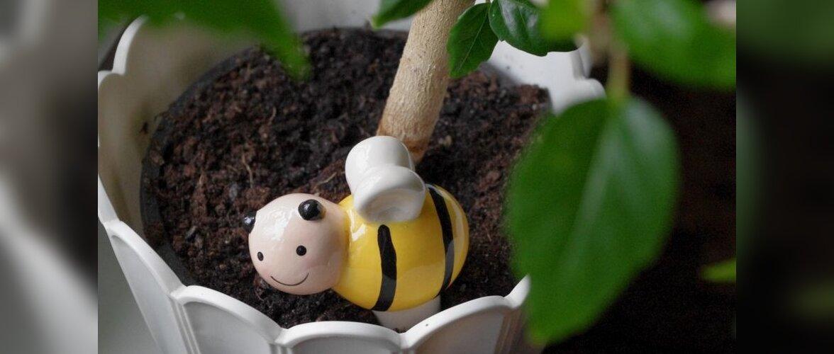Mis saab, kui taimed tuleb jätta omapead?
