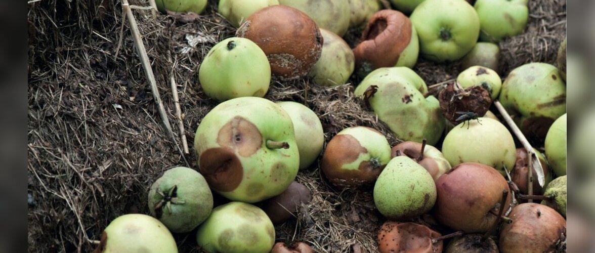 mida teha õuntest