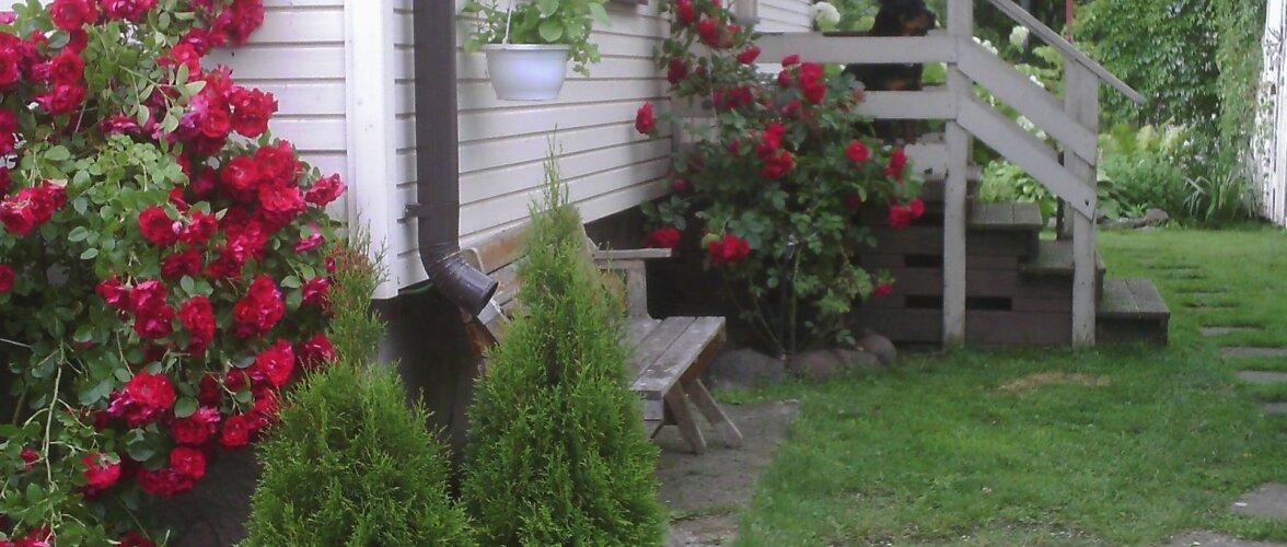 """Fotovõistlus """"Minu kodu suvel"""": Aiakaunitarid maalähedases aias"""