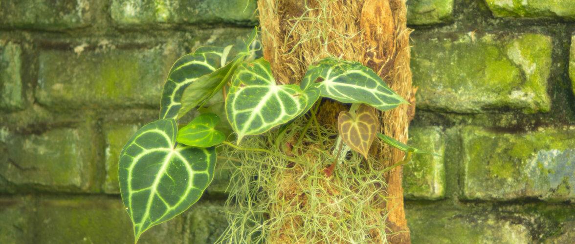 Fassaadid rohetavad - vetikad ja samblikud kiusavad! Loe lähemalt põhjustest