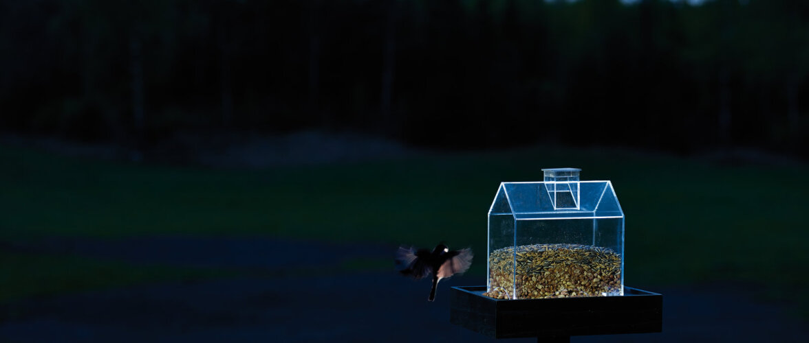 Novembris on õige aeg alustada lindude toitmisega — vaata lahedaid linnumaju