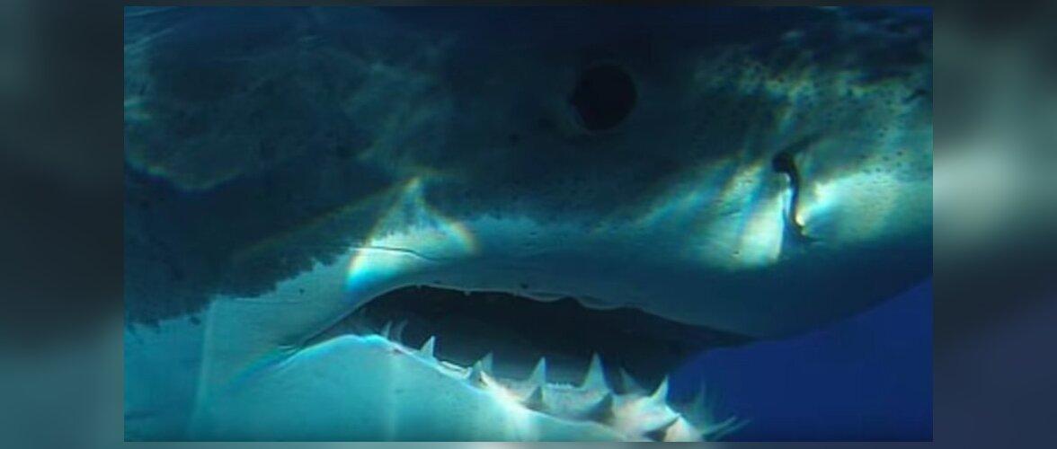 Мегалодон жив? Дайверы утверждают, что сняли на видео гигантскую акулу, которая давно считалась вымершей