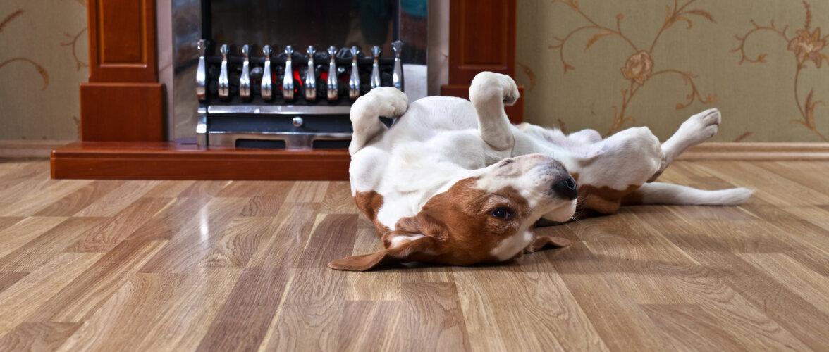 Milline materjal on põrandale parim, kui kodus on lemmikloom?