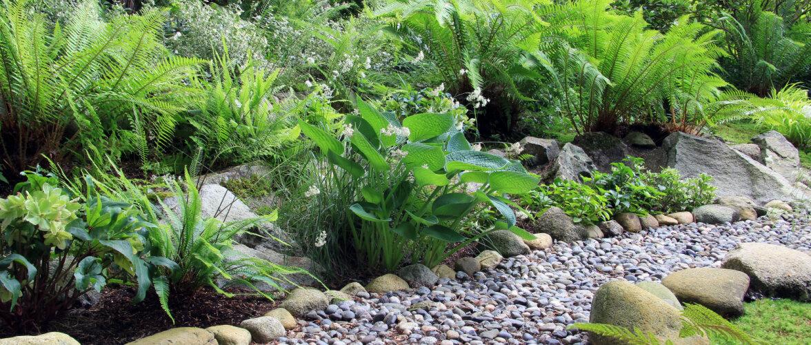Millised taimed kasvavad hästi ka varjulises aianurgas?