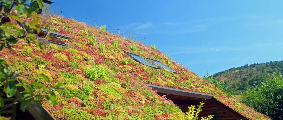 Paneme katused haljendama ehk kuidas rajada rohekatust?