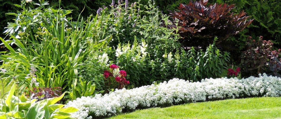 AIAHOOLIK   Kesksuvi laseb aeda nautida! Maitsvad ampsud maasikaamplist ja katsetus hiidiisopiga