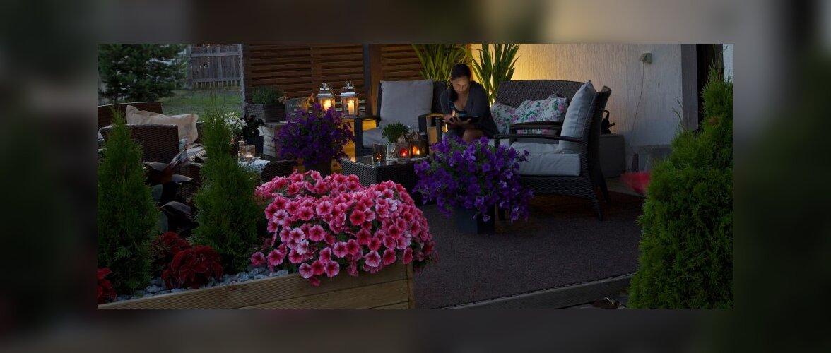 """Fotovõistlus """"Minu kodu suvel"""": Moonika kaunis ja avar terrass"""