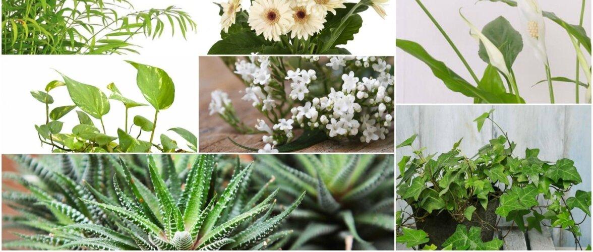 12 taime, mis sobivad magamistuppa ja aitavad uinuda