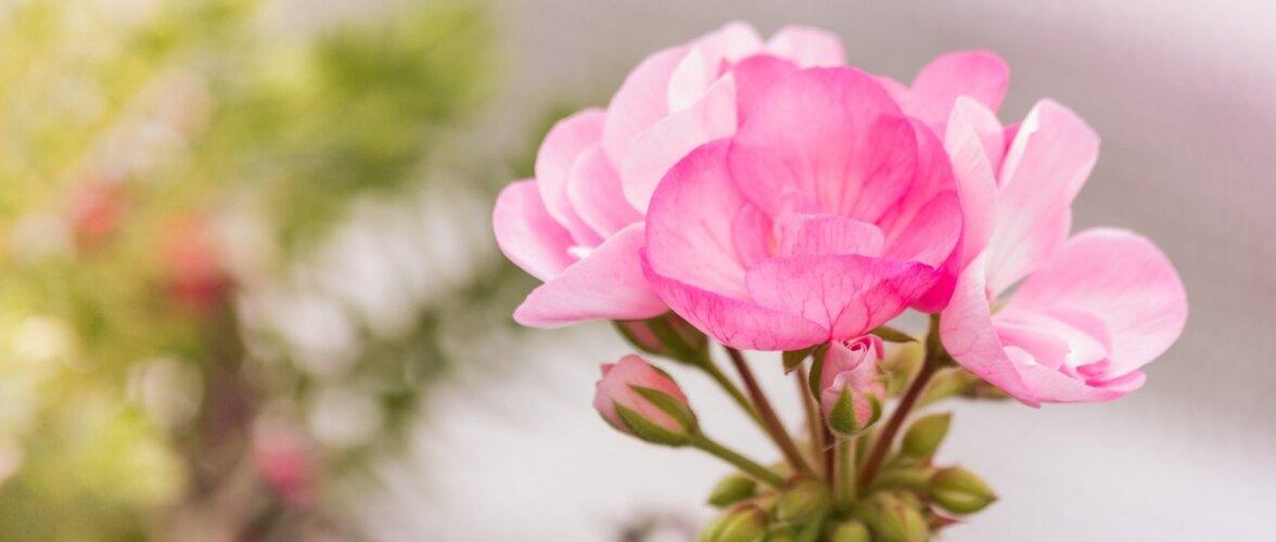 НАШ САД│Цветущая десятка мая: неприхотливые растения