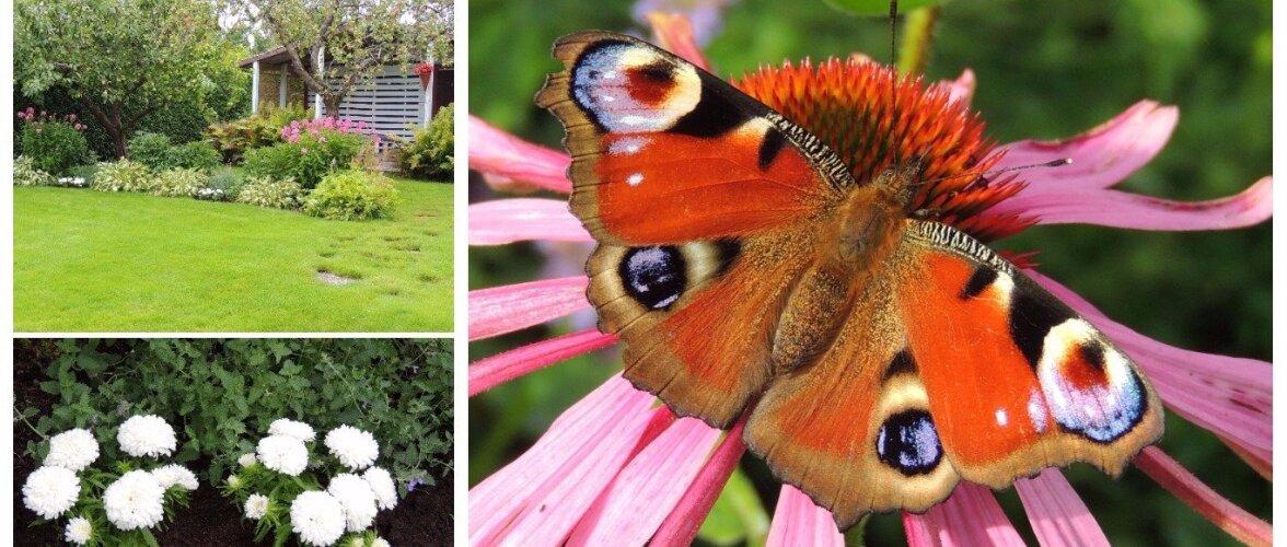 AIAHOOLIK | Ohtrasti liblikaid, suvelõpuõisi ja üks idee uueks hooajaks