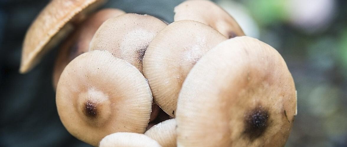 Seened kui ehitusmaterjal. Hakkame seeneniidistikust ehitama kuni kahekorruselisi maju