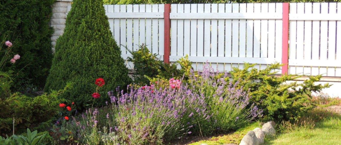 AIAHOOLIK | Mis saab siis, kui on laiskade aiapäevade lõpp