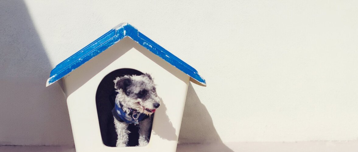 Koer tahab oma maja — ideid kuudi ehitamiseks!