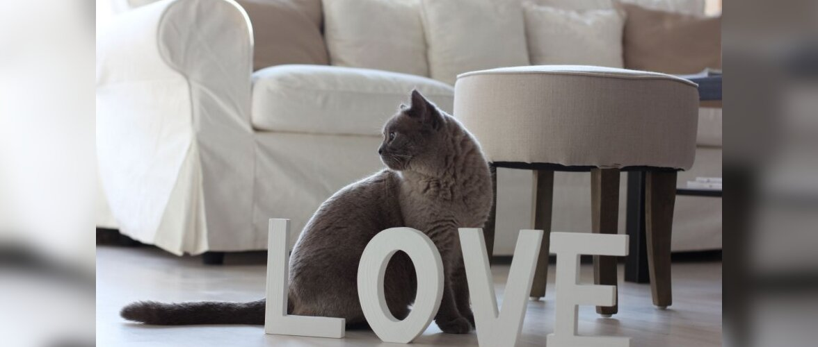 Lemmikloomale moodne ja mugav olemine