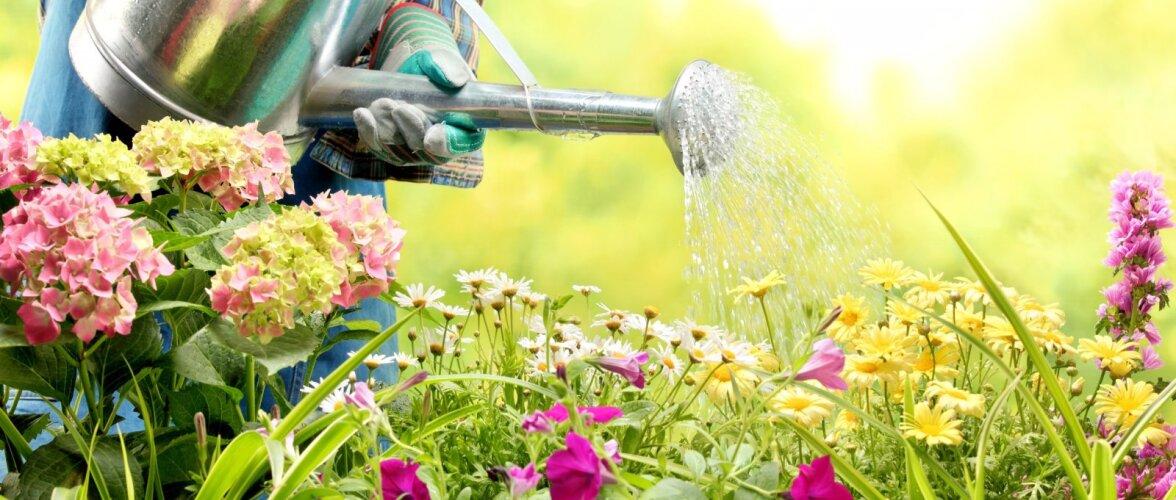 NÕUANDEID │ Millised aiatööd peaks ette võtma juunikuus?