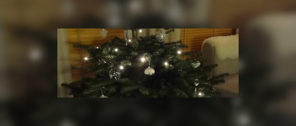 Eestlaste jõulud välismaal: Norra päkapikud, inglid, tähekesed ja 40 miljonit martsipanifiguuri