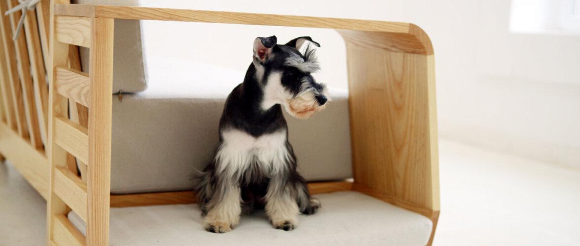 Moodne pesa lemmikule: kas kutsikas keerab kodu peapeale?