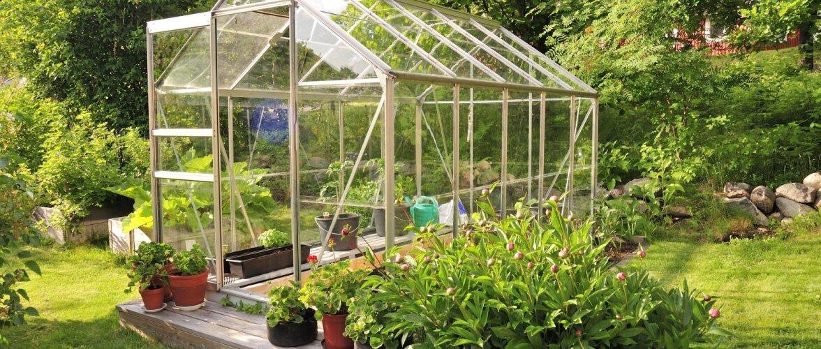 Kuidas vabaneda kasvuhoones pesitsevatest tüütutest kahjuritest
