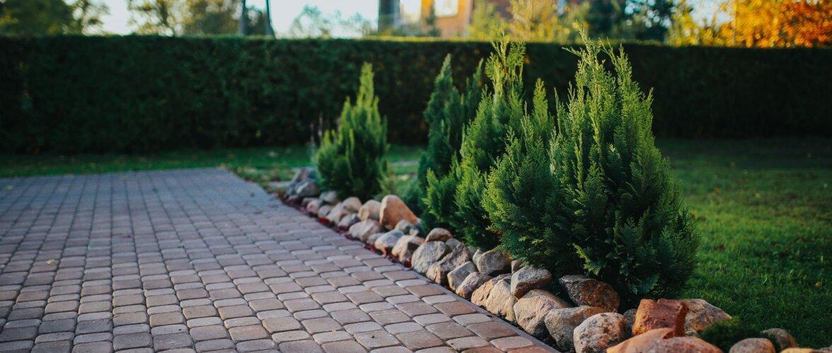 Aiaomaniku aasta kiire lõpp: sibullilled mulda, istuta puid ja külva köögivilju!