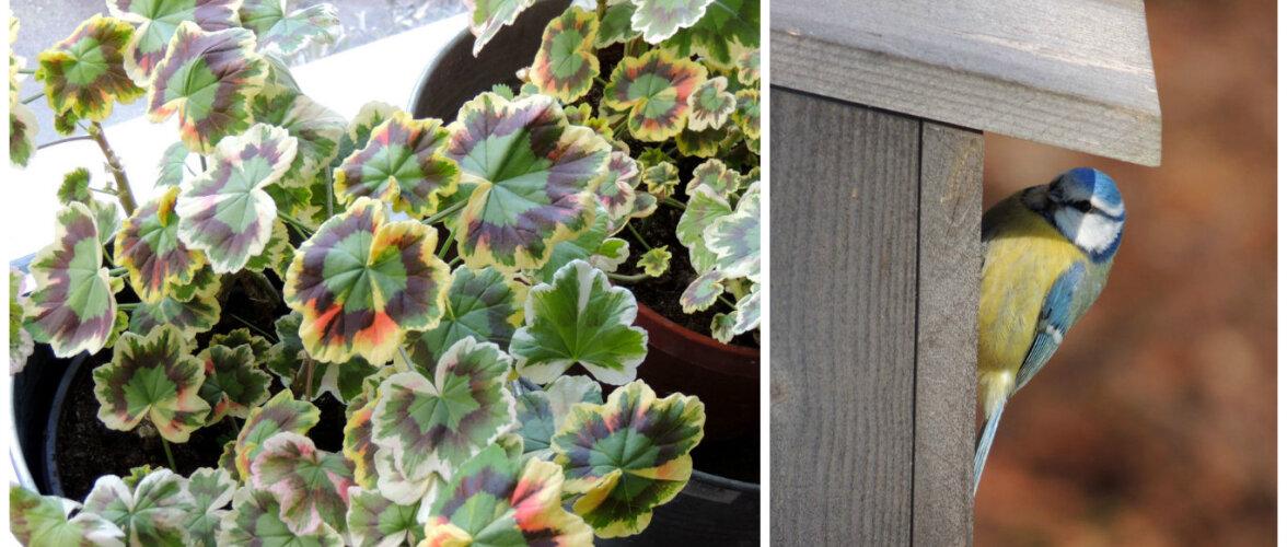 AIAHOOLIK: kiusatustest, kaktusemullatud taimedest ja õnnelikest juhustest