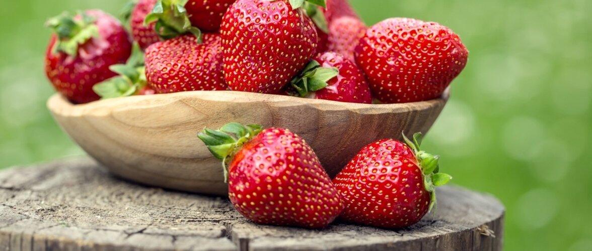 Maasika frigotaim annab saaki juba istutusaastal