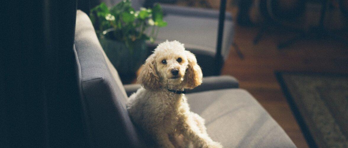Ära lase lemmikloomal kinnisvara väärtust kahandada