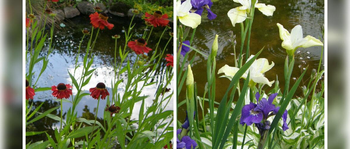Värvikatest lilledest ümbritsetud tiigike loob suvise meeleolu